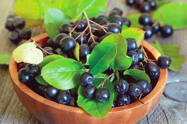 Черноплодная рябина польза и вред, рецепты приготовления