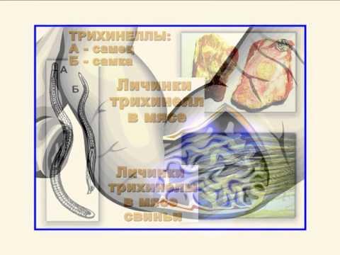 Профилактические методы предупреждения гельминтоза