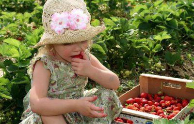 Поедание немытых ягод и овощей