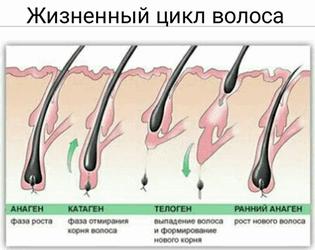 фаза роста волоса