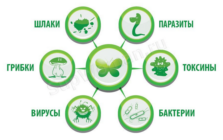 Очищение организма от шлаков и токсинов в домашних условиях, особые методики очищения