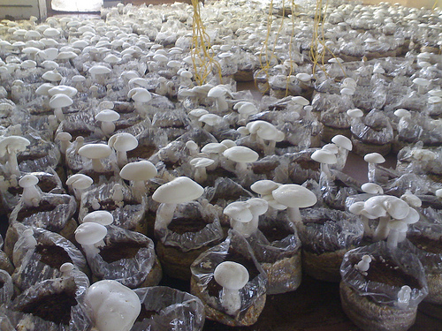 Молочный гриб. Польза и вред. Отзывы врачей