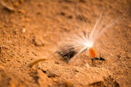 Как используют муравьиное масло против роста волос